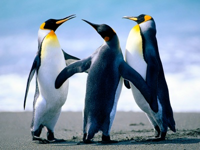 penguins_400